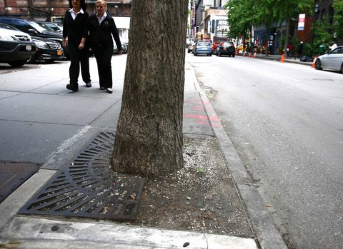 Stolen Steel Tree Grate