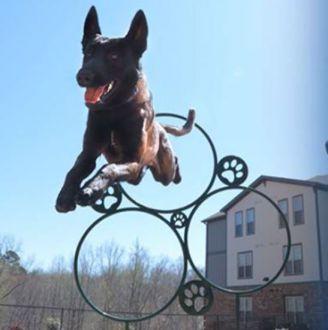 Hoop Jump